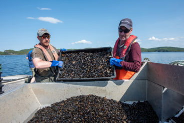 Seed Mussels NP M-542